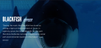Image from Blackfish via BritDoc Impact Awards
